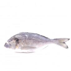 Рыба Дорада св/мор