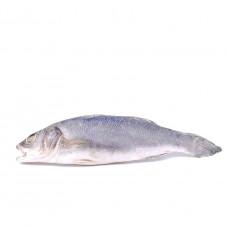 Рыба Сибас св/мор