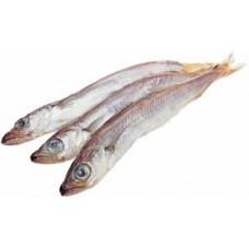 Рыба Путассу св/мор