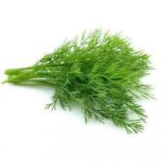 Укроп зеленый